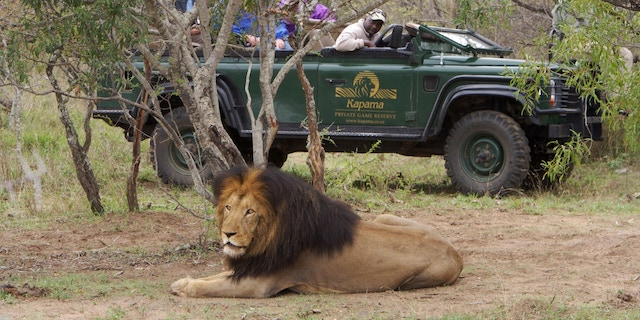 Experience South Africa On An Adventures by Disney Family Vacation